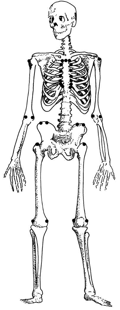 Development of the human Achilles tendon enthesis organ