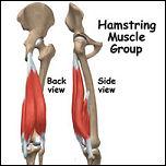 proximal hamstring