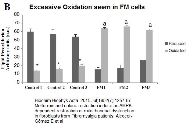 fm_cells