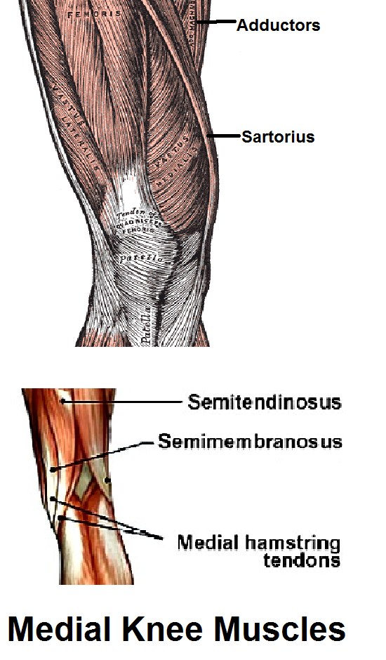 Medial Knee Pains In Adductors What Can You Do Pain Medical
